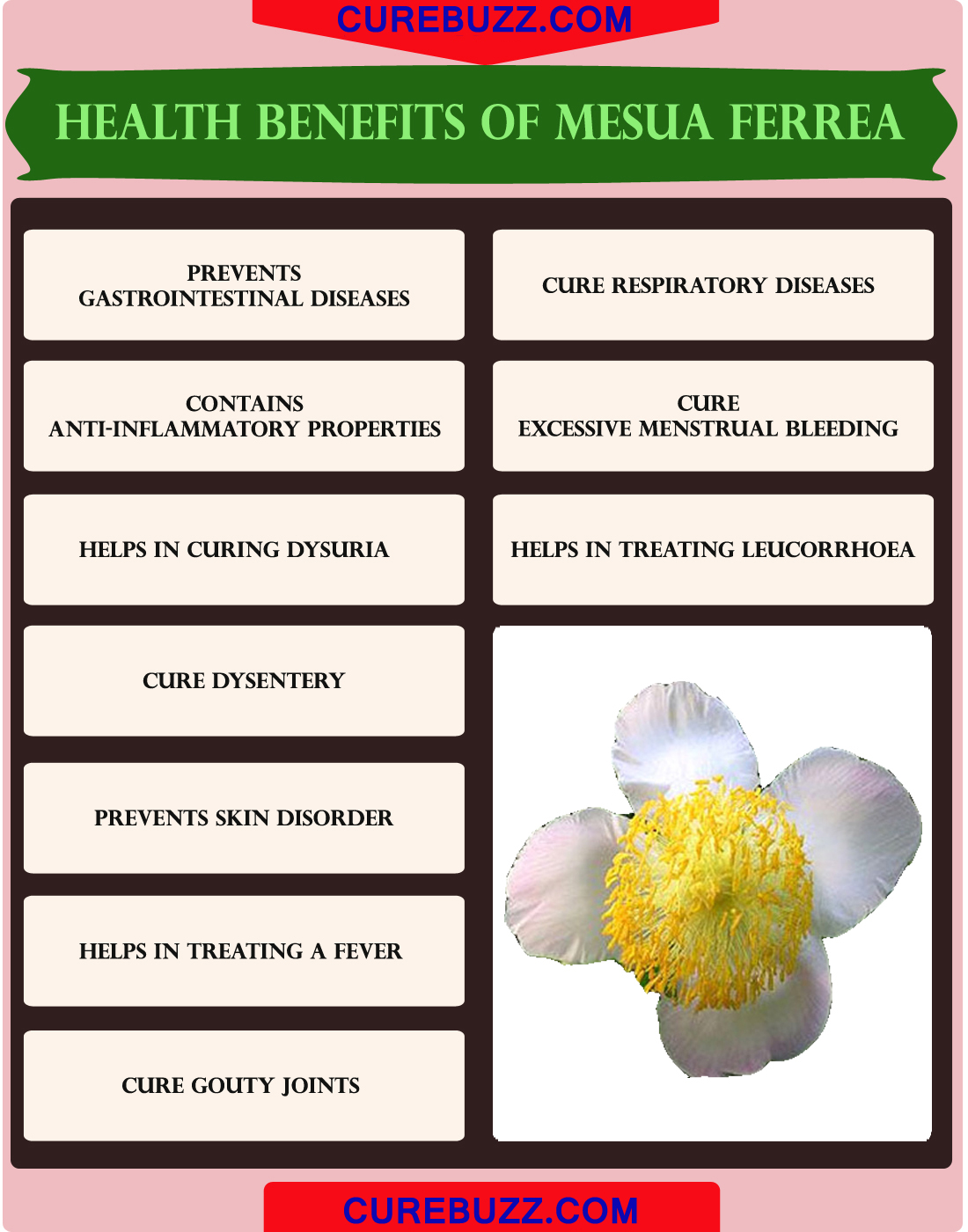 Health Benefits of Mesua Ferrea