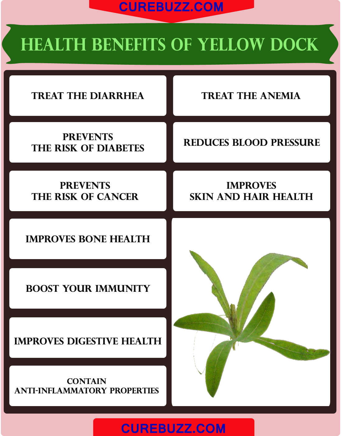 Health Benefits of Yellow Dock