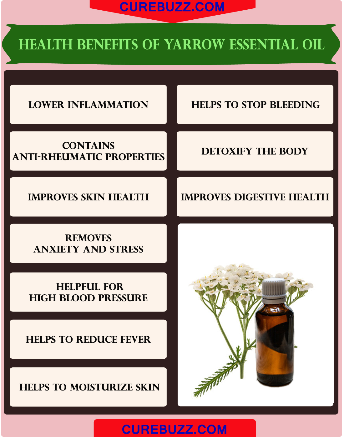 10 Health Benefits Of Yarrow Essential Oil Curebuzz